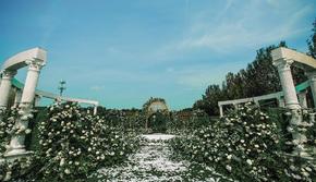 【最新热卖】梦想小维罗纳草坪婚礼
