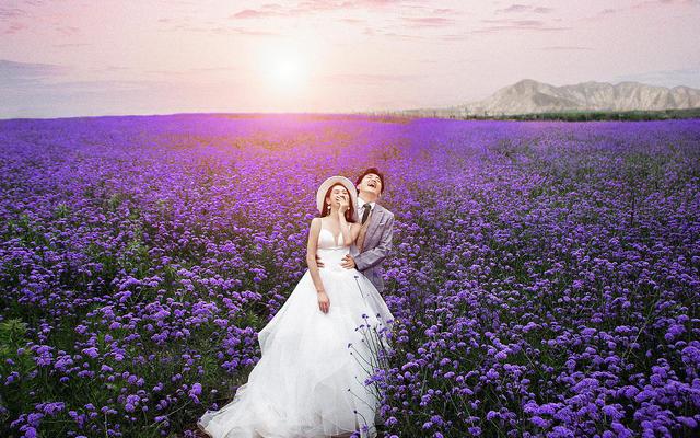 金星摄影最新作品——紫金花海