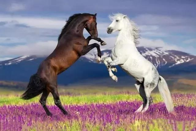 屬馬找屬什麼結婚最好屬馬與其他屬相的婚配指數【婚禮紀】