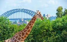 蜜月去悉尼旅游攻略
