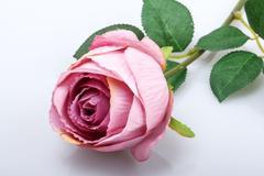 求婚送玫瑰19朵代表什么意思