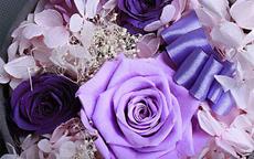 求婚送紫玫瑰有什么含义