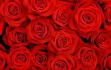 男友送红色玫瑰代表什么意思