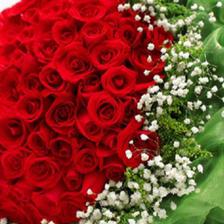 求婚用多少朵玫瑰花 不同数量的玫瑰花代表着什么含义