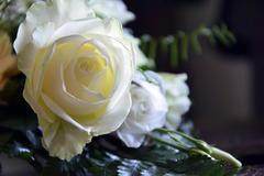 求婚用什么花好 白玫瑰是适合求婚的花束吗
