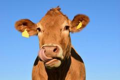 属马和属牛的婚姻会怎么样 马和牛在一起能不能长久