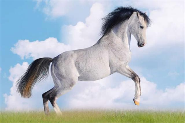「屬馬」的圖片搜索結果