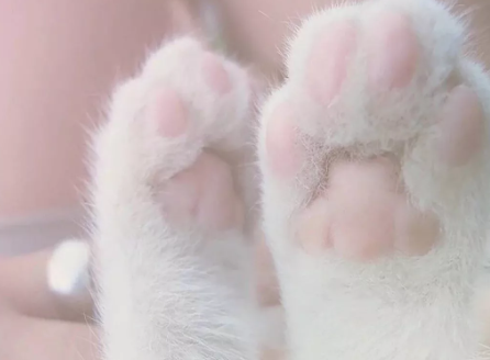 /猫咪爪子
