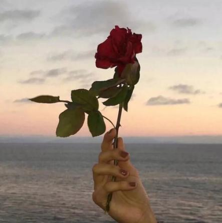 /一枝玫瑰