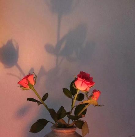 /在花瓶里的花