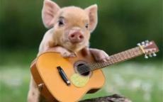 猪和狗属相配不配 适合结婚吗