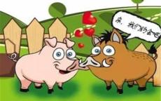 属牛和属猪的相配吗