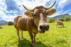 97年属牛的属相婚配表