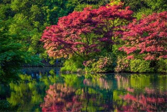 新西湖十景之九溪烟树