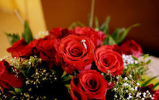 33朵玫瑰花代表什么意思 求婚用33朵玫瑰花合适吗