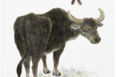97年女属牛的属相婚配表