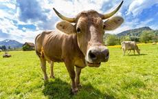 生肖牛和什么生肖婚姻最配
