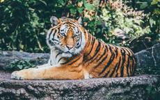 属虎的和什么属相相克
