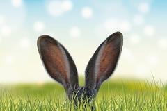 属兔和属马的婚姻如何