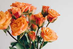 老婆生日礼物送什么花