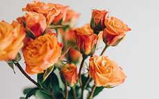 求婚送4朵玫瑰代表什么意思
