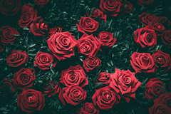 求婚送十八朵玫瑰代表什么