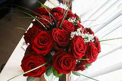 求婚送33朵玫瑰代表什么寓意