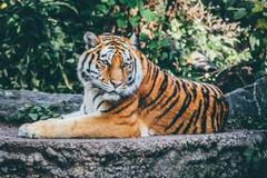 两个属虎的人能结婚吗