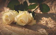 香槟玫瑰花语是什么,结婚纪念日送好吗
