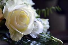 求婚送十九朵红玫瑰代表什么意思