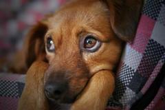 生肖狗和什么生肖配是最合适的