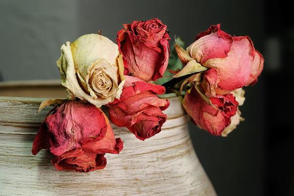 玫瑰花干花