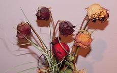 玫瑰花怎么做成干花