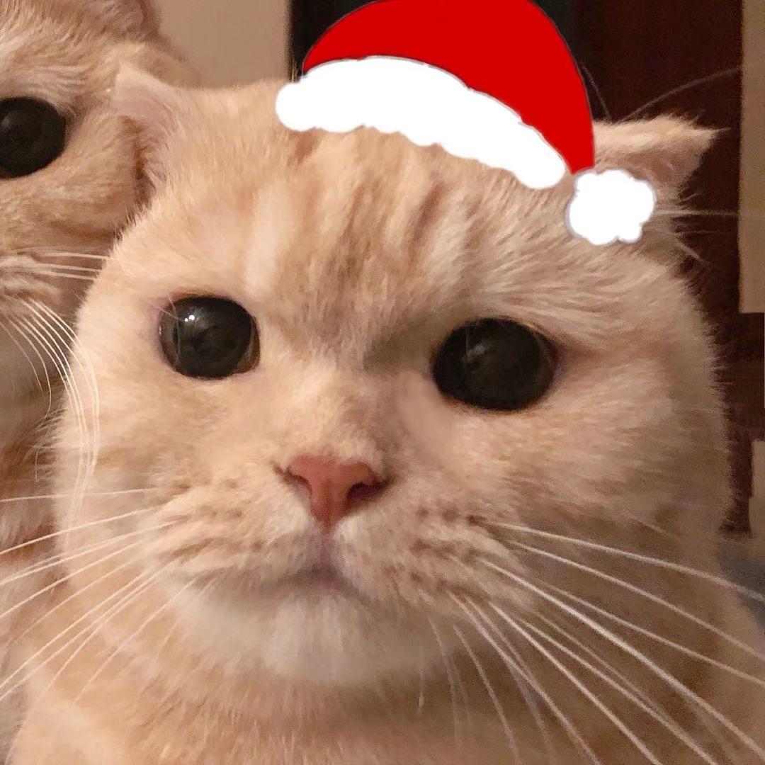 圣诞情侣头像11