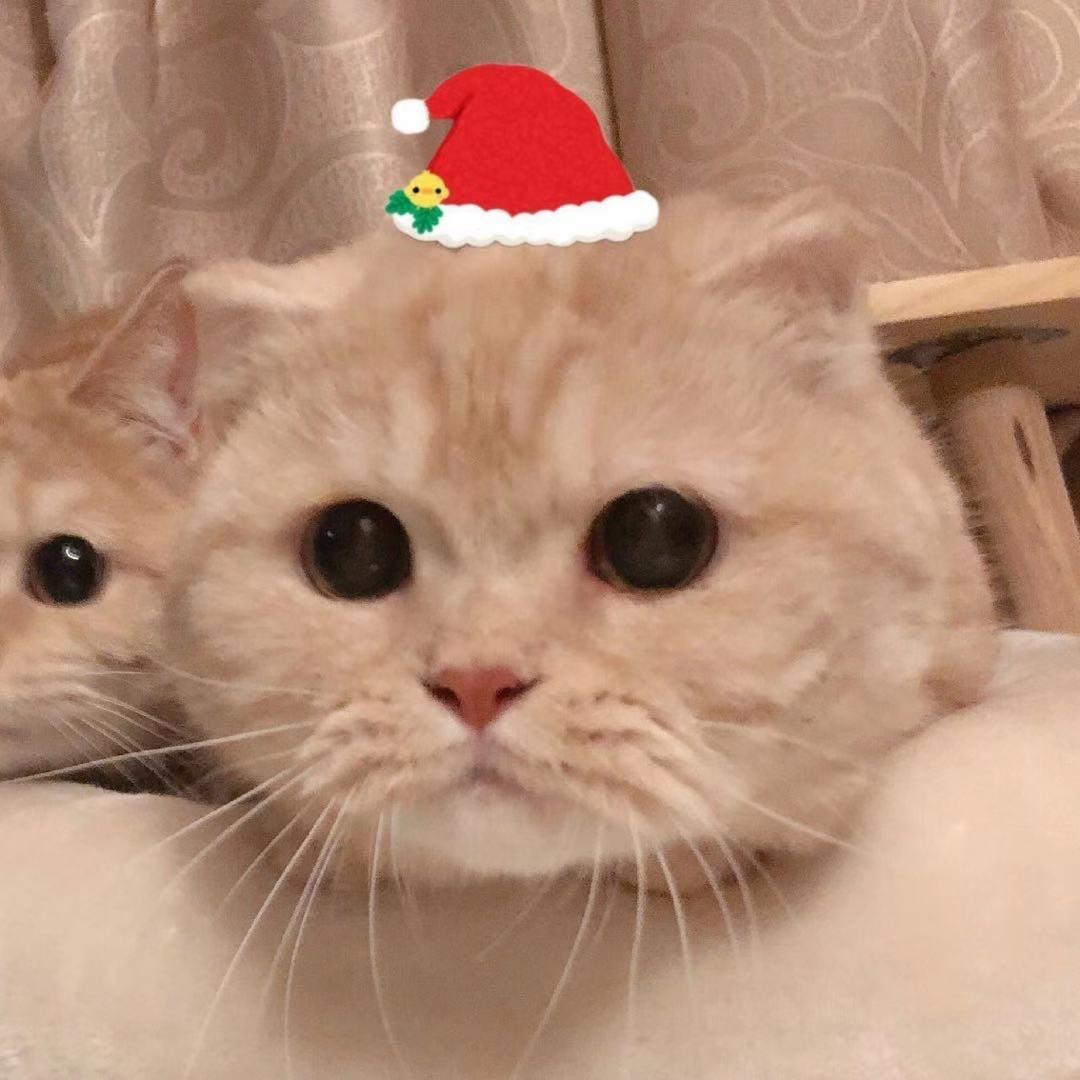 圣诞情侣头像12