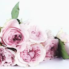 代表祝福传递的结婚手捧花用什么花?