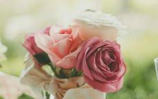 求婚用什么花 求婚送花用多少朵