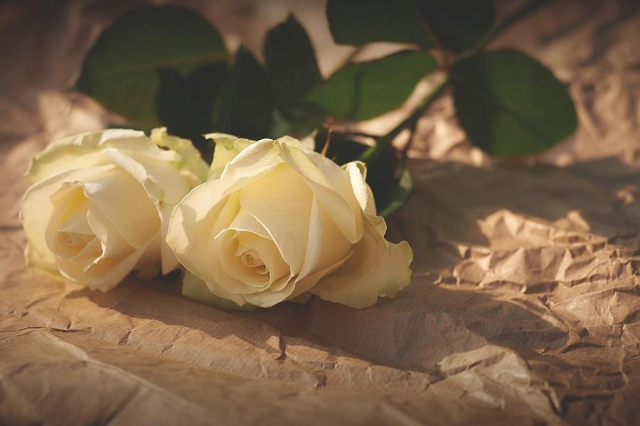 求婚用的玫瑰花