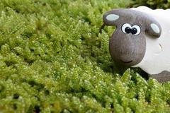 属羊和属鼠的婚配好吗 会幸福长久吗