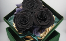 黑玫瑰的寓意是什么 适合送给女朋友吗