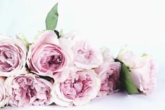 白色情人节送花哪家好?