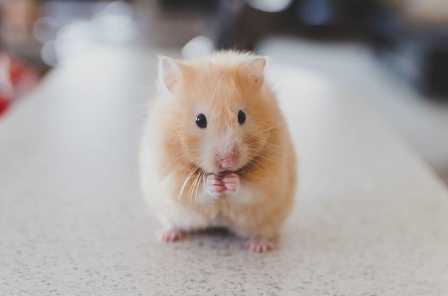 2020年属鼠是什么命