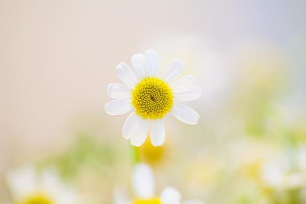 清晨的花朵