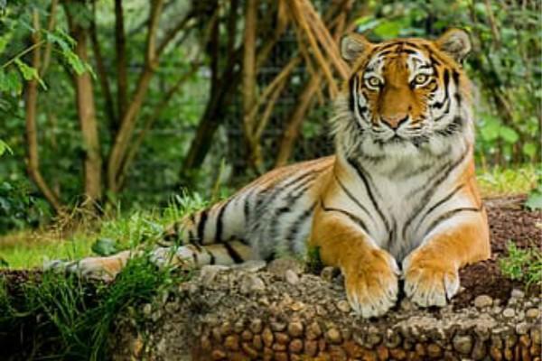 蛇和虎相配婚姻如何