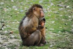 属虎和属猴的婚姻怎么样 属虎和属猴的合不合