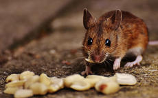 84年属鼠一生大劫年在哪几年 84年属鼠的哪年起大运