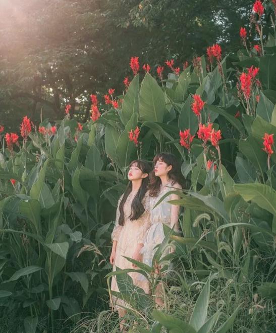 女生在花丛中拍照