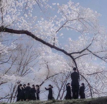 樱花树下站着的男女