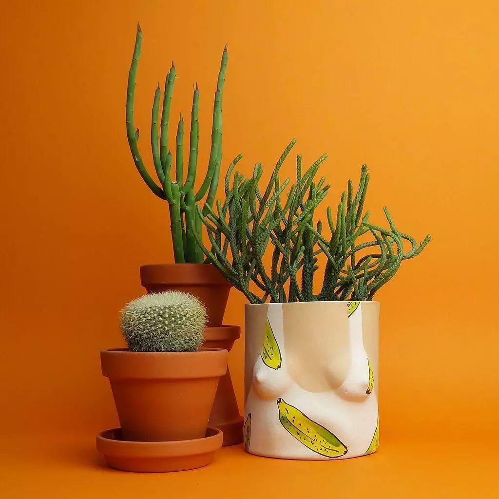 绿色植物和花盆