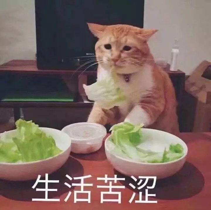 猫咪吃青菜的表情包